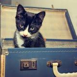 在葡萄酒手提箱的逗人喜爱的小猫 免版税图库摄影