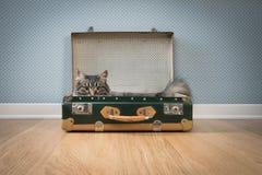 在葡萄酒手提箱的逗人喜爱的猫 免版税库存照片