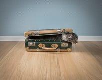 在葡萄酒手提箱的滑稽的猫 库存图片