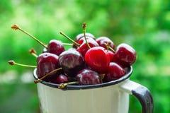在葡萄酒搪瓷杯子的成熟有机新近地被采摘的甜樱桃在绿色叶子庭院自然背景 夏天收获维生素 库存图片