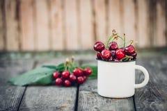 在葡萄酒搪瓷杯子的成熟有机新近地被采摘的甜樱桃在绿色叶子庭院自然背景 夏天收获维生素 免版税图库摄影