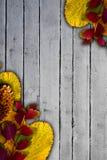 在葡萄酒木背景的五颜六色的叶子 库存照片