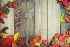 在葡萄酒木背景的美丽的槭树叶子, 库存图片
