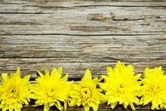 在葡萄酒木表上的黄色花 免版税库存照片