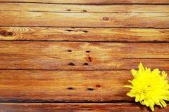 在葡萄酒木表上的黄色花 免版税图库摄影