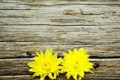 在葡萄酒木表上的黄色花 免版税库存图片