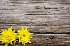 在葡萄酒木表上的黄色花 图库摄影