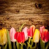 在葡萄酒木头的俏丽的郁金香边界 免版税库存图片