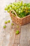 在葡萄酒柳条筐的绿色葡萄莓果 库存照片