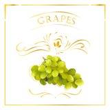 在葡萄酒样式的传染媒介卡片用葡萄 与金黄线的风格化图画在白色背景 库存照片