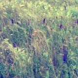 在葡萄酒样式的抽象花卉背景 野花和gr 库存照片