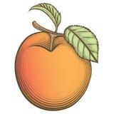 在葡萄酒样式的板刻杏子 免版税库存图片