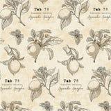 在葡萄酒样式的植物的样式与柠檬分支 图库摄影
