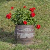 在葡萄酒样式的花Garden.vector花卉背景 充分桶安排红色花在匈牙利 免版税库存照片