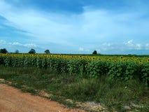 在葡萄酒样式的花Garden.vector花卉背景 图库摄影
