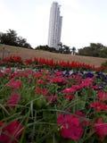 在葡萄酒样式的花Garden.vector花卉背景 库存图片