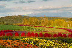 在葡萄酒样式的花Garden.vector花卉背景 免版税图库摄影