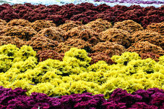 在葡萄酒样式的花Garden.vector花卉背景 库存照片