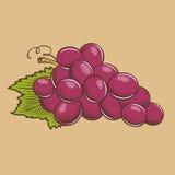 在葡萄酒样式的葡萄 色的向量例证 图库摄影