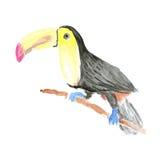 在葡萄酒样式的水彩tucan鸟 免版税库存图片