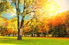 在葡萄酒的秋天美丽如画的风景在阳光下定调子阳光秋天公园之前点燃的晴朗的秋天风景公园 免版税库存图片