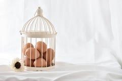 在葡萄酒的鸡蛋在白色背景关进笼子隔绝 免版税库存图片