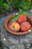 在葡萄酒碗的新鲜的桃子 免版税库存图片