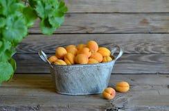 在葡萄酒篮子的新鲜的杏子 免版税库存图片