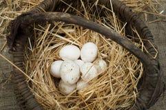 在葡萄酒篮子的有机白色国内鸡蛋 库存图片