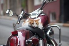 在葡萄酒红色小型摩托车的小猫 库存图片
