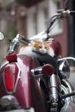 在葡萄酒红色小型摩托车的小猫 免版税库存图片
