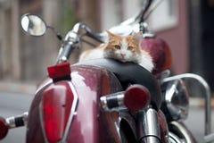 在葡萄酒红色小型摩托车的小猫 免版税库存照片
