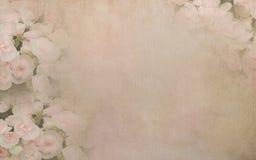 在葡萄酒纸背景的秋海棠花 库存图片