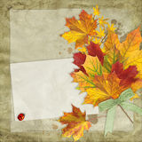 在葡萄酒背景的秋天叶子 库存图片