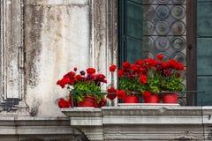 在葡萄酒阳台的红色花在威尼斯 免版税库存照片