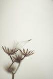 在葡萄酒颜色样式的花在桑树纸纹理 免版税库存图片