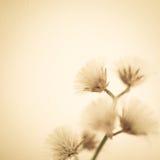 在葡萄酒颜色样式的花在桑树纸纹理 免版税库存照片