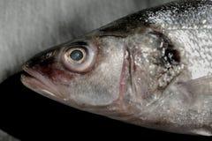 在葡萄酒黑色石头的新银色鲈鱼头 库存图片