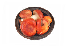 在葡萄酒黏土碗的牛肝菌蕈类可食蘑菇 免版税库存图片