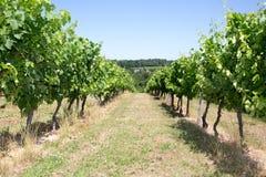 在葡萄wineyards的日出在法国 图库摄影
