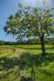 在葡萄wineyards的日出在红葡萄酒地区 图库摄影
