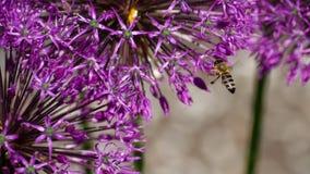 在葱花的蜂 股票录像