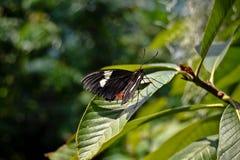 在蒂尔加滕的蝴蝶 库存照片