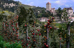 在蒂罗尔的背景的红色苹果防御 被弄脏的背景 免版税图库摄影