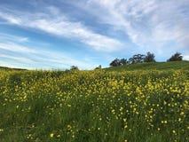 在蒙加马利小山足迹,常青区域的开花的开花在圣荷西 免版税图库摄影