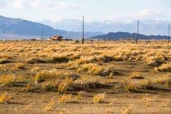在蒙古干草原的金黄黄色草 图库摄影