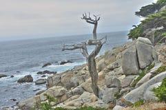 在蒙特里海湾的鬼魂树17英里驱动 免版税库存照片