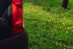 在蒲公英汽车的反射在绿草开花 库存照片