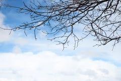 在蓝天上的树枝与云彩 库存照片