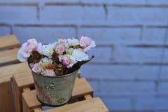 在蓝天云彩背景的桃红色波斯菊花在庭院领域 图库摄影